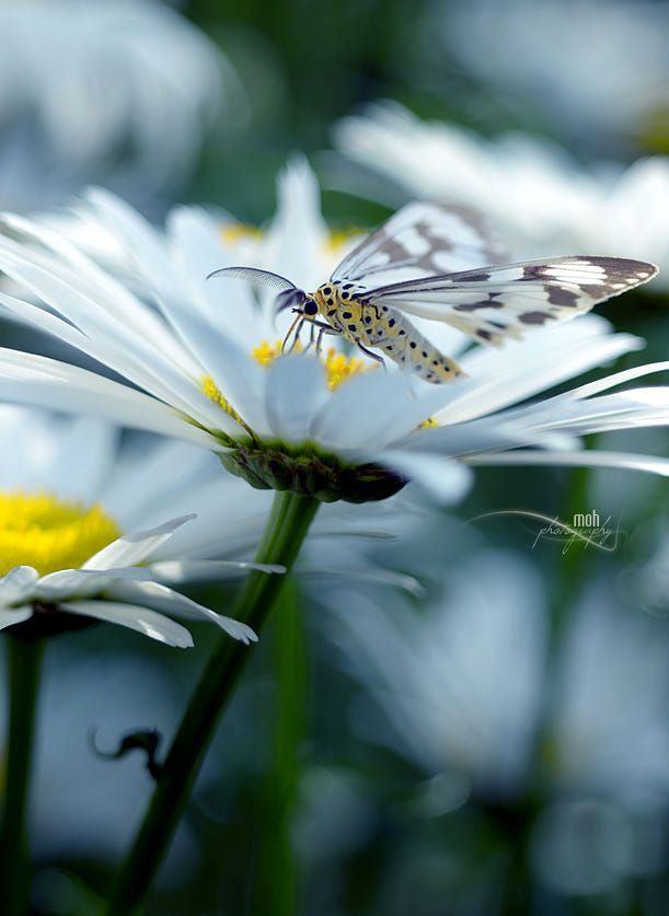 Nature Art Of God By Mohan Duwal Bees Butterflies And