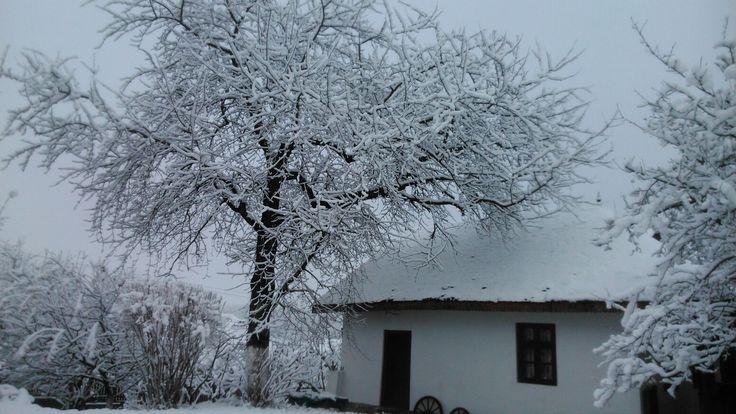 Cireș în iarna 2017
