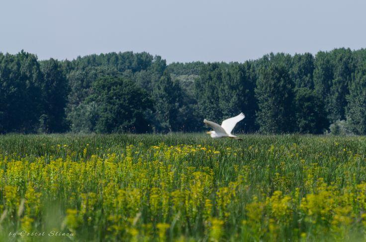 https://flic.kr/p/qK396s | Danube Delta. Delta Dunarii, Romania | Danube Delta. Delta Dunarii, Romania