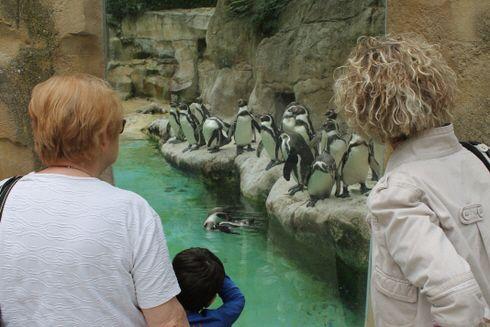 Record de fréquentation au Parc zoologique d'Amiens Métropole