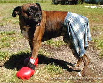 I actually did this to my boxer one year!! He was in