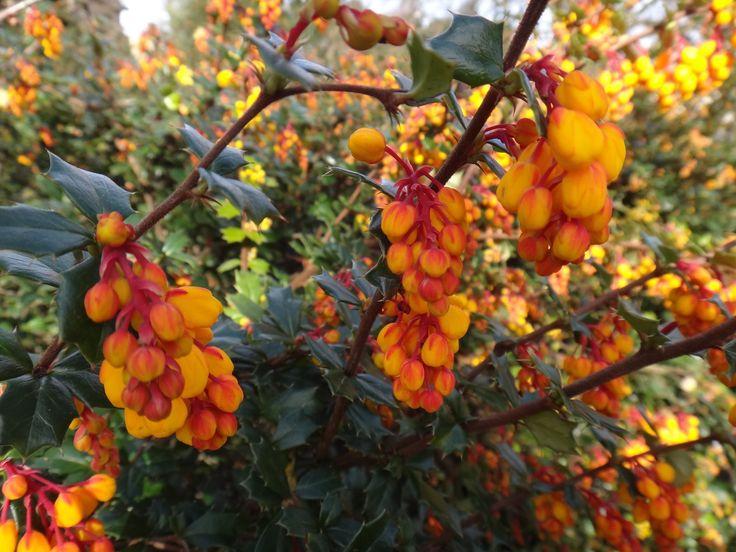 flores de york inglaterra