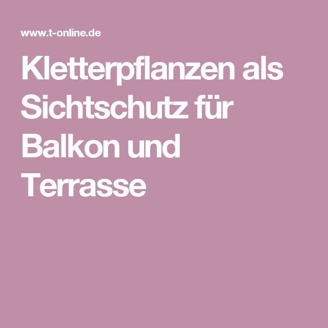 25+ Best Ideas About Kletterpflanzen Balkon On Pinterest ... Kletterpflanzen Balkon Und Terrassen