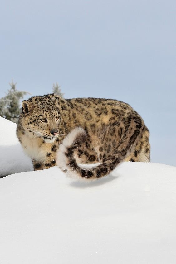 Pin by Nikoloz Bionika on Animals | Pinterest | Snow ...