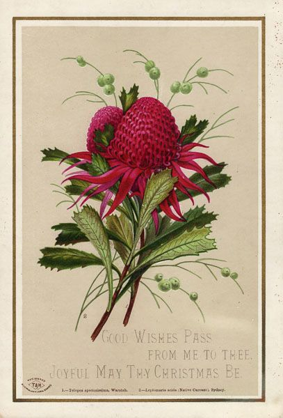 1879: Sydney publisher Turner & Henderson sold sets of 12 Christmas cards featuring Australian native wildflowers painted by Helena Forde. Almost certainly the very first Australian Christmas cards although they may not have been printed in Australia.