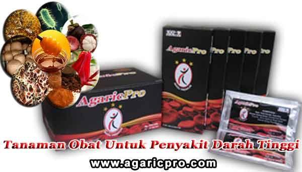 Tanaman Obat Untuk Penyakit Darah Tinggi: http://www.agaricpro.com/tanaman-obat-untuk-penyakit-darah-tinggi/