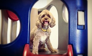 Groupon - One, Three, or Five Days of Dog Daycare with a Behavioral Evaluation at The Barka Lounge Doggy Day Care (Up to 70% Off) in Shelby Township (Utica). Groupon deal price: $12.00