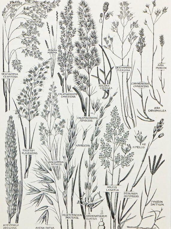 Botanische Zeichnungen Satz von 4 Vintage von PeonyandThistlePaper
