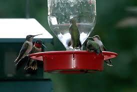 como hacer un comedero para aves - Buscar con Google