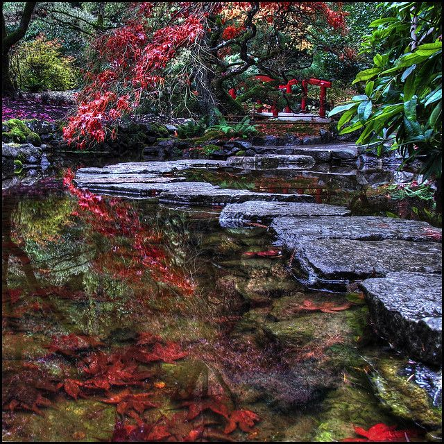 Japanese Garden. Making Your Way Gently Among The Fallen Part 67