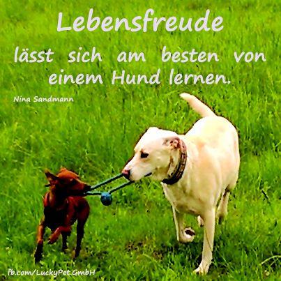 #Hund #luckypet #dog #zitate #spruch