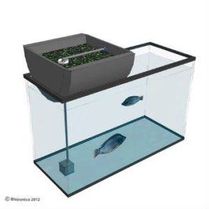 57 best mini aquaponics images on pinterest aquaponics for Aquaponics fish tank for sale