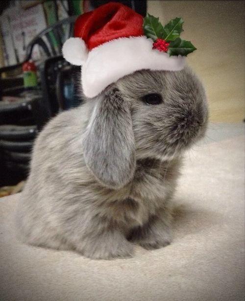 Lieve schattige kerst konijntje!! I love a rabbit !!!