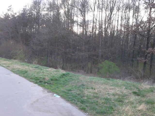 En Barrandov teníamos dos grandes bosques que son bonitos. Me gustaban los bosques.