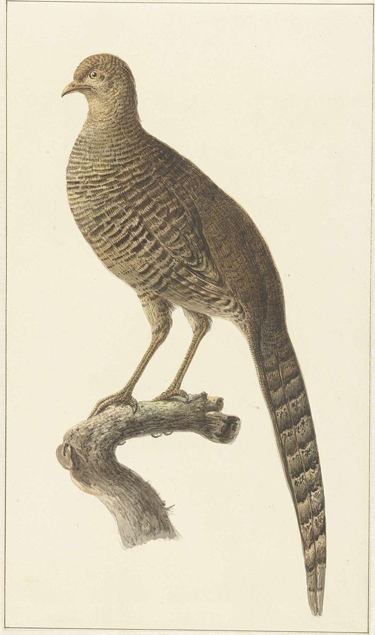 53 best Teylers Museum & Birds images on Pinterest | Audubon birds ...