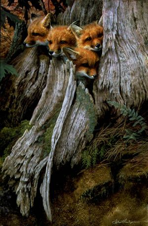 """Four Little Foxes: """"Be gentle Spring, and make no sudden sound, for in my windy valley yesterday I found newborn foxes squirming on the ground."""""""