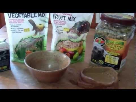 Russian Tortoise Food | Horsefield Tortoise