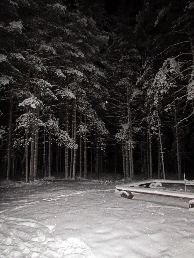 Campfire place at winternight. Soljanen, Seitseminen National Park.