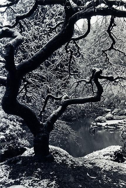 Winter in Portland Japanese Garden, Oregon