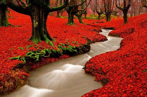 Red Autumn Woods, Portugal.
