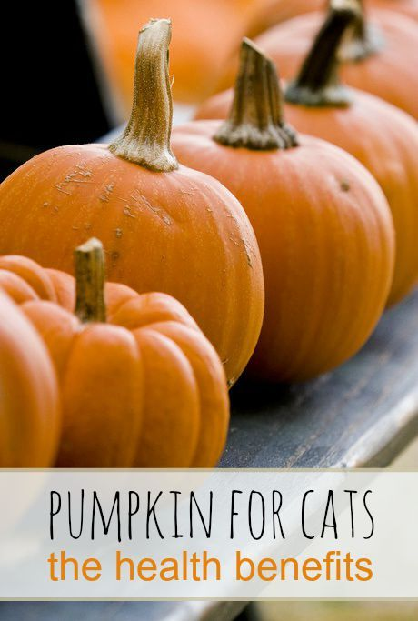 Pumpkin has a surprising range of health benefits for cats including better digestion, hairball prevention, healthy coat and skin, and more | The Health Benefits of Pumpkin for Cats
