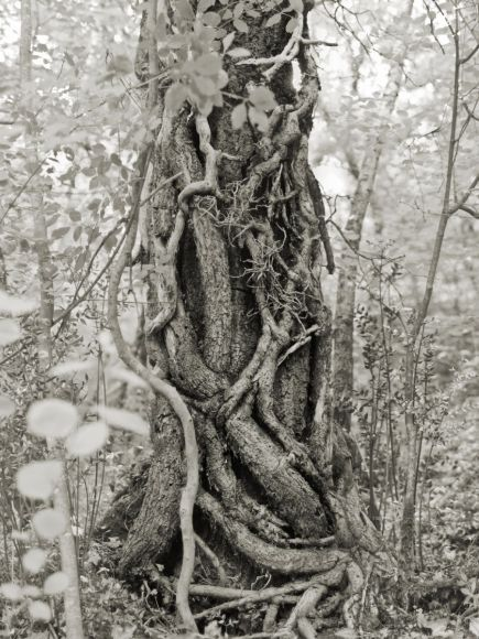 Veins and arteries of the tree