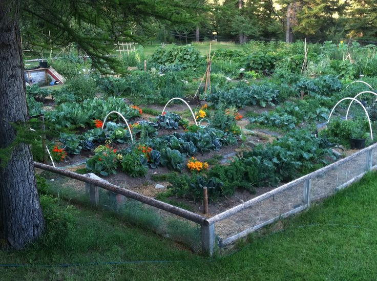 Organic Garden. Backyard Garden IdeasOrganic Gardening TipsOrganic ... Part 95