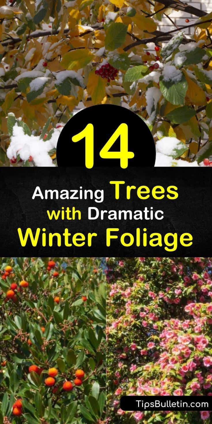 14 Leaf Retaining Trees For When You Really Need Green In The Winter Trees To Plant Winter Garden Easy Garden