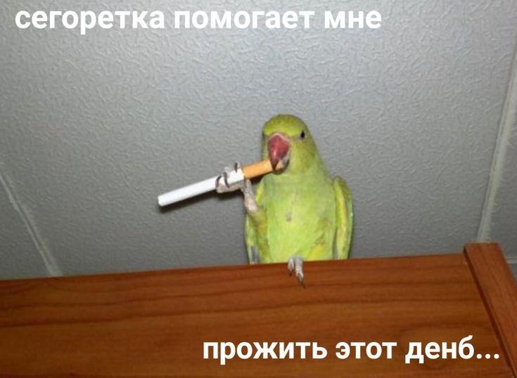 Открытка попугай с пистолетом, поздравить друга мужчину