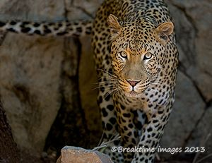 A very photogenic #leopard!