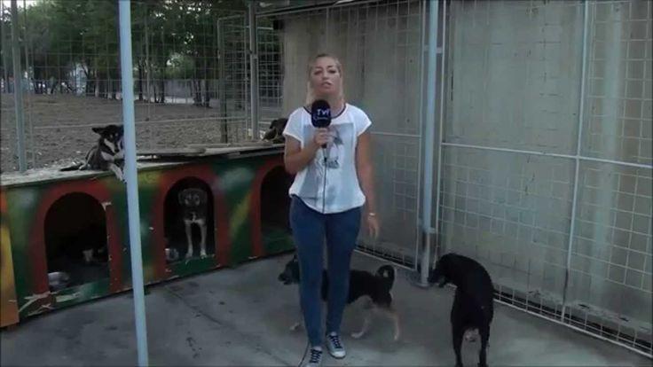 Cane urina su una giornalista