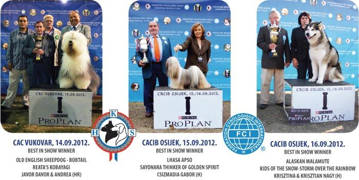 Have a look at the best photos and results of the Slavonia Shows 2012! Dog Shows from Croatia.  http://worldog.com/slavonia-shows