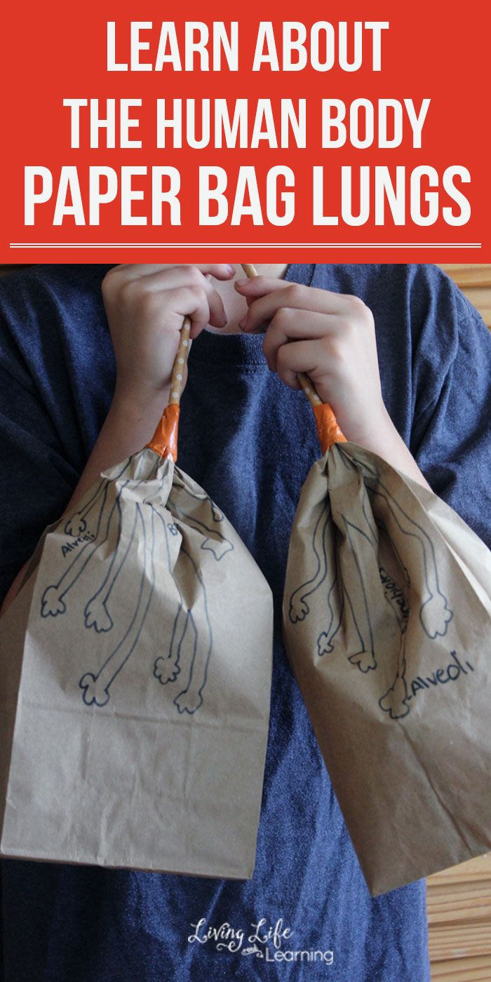 Cool human body activity for kids - Make your own paper bag lungs activity - Learn about the human body and see how the lungs work and the correct names for their anatomy.