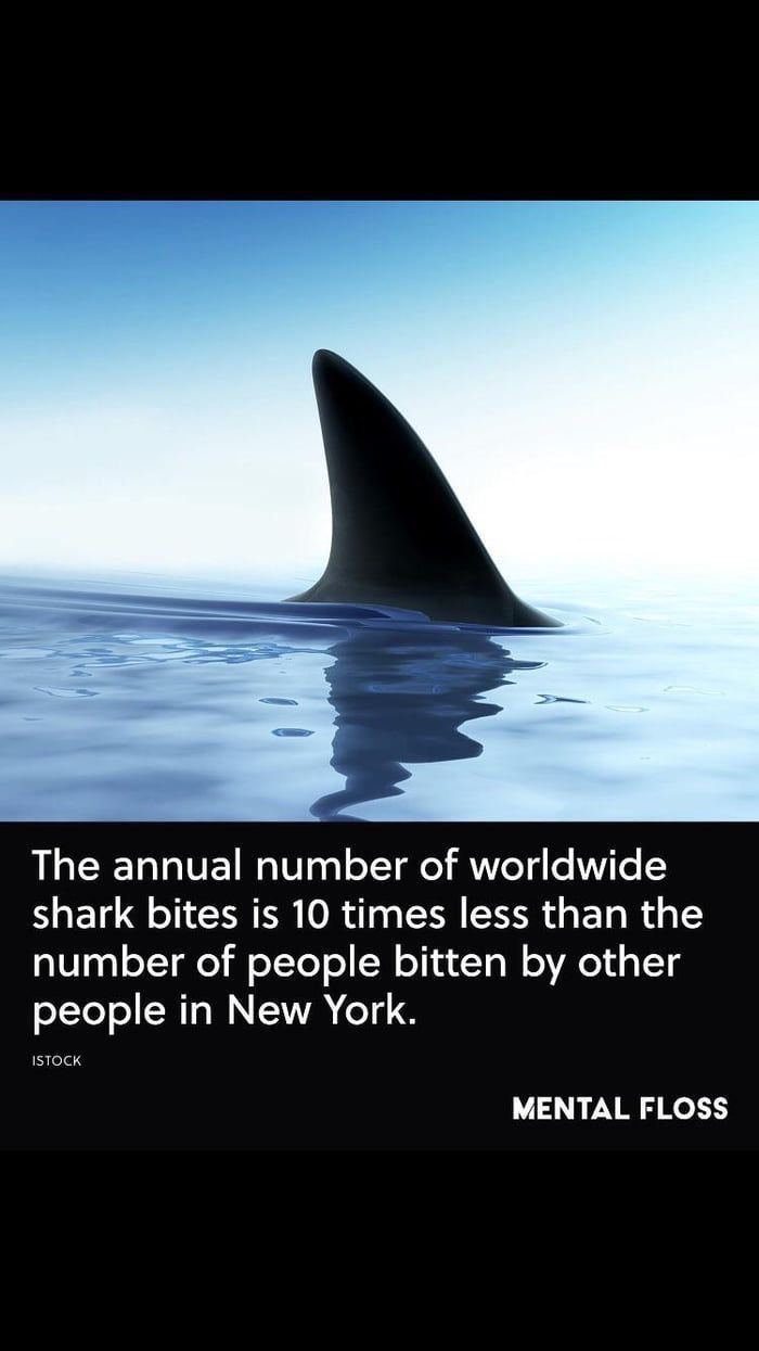 Pin By Brittany Skaggs On Lifestyle Shark Facts Shark Week Memes Sharks Funny
