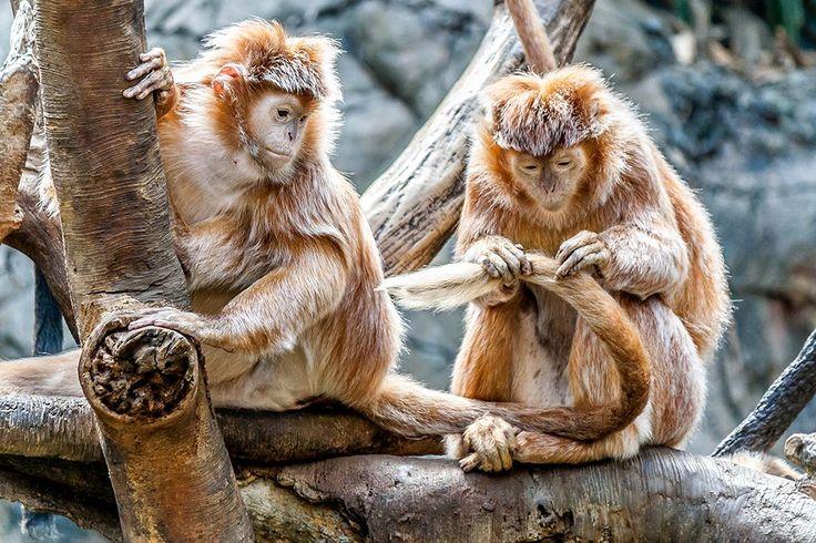 Dé 4 leukste dierentuinen om met jouw kinderen heen te gaan! :: Dailytrend