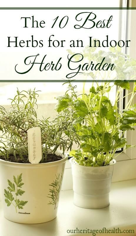 These 10 Easy To Grow Herbs Are Perfect For An Indoor Herb Garden So You Can Have Fresh All Year Long