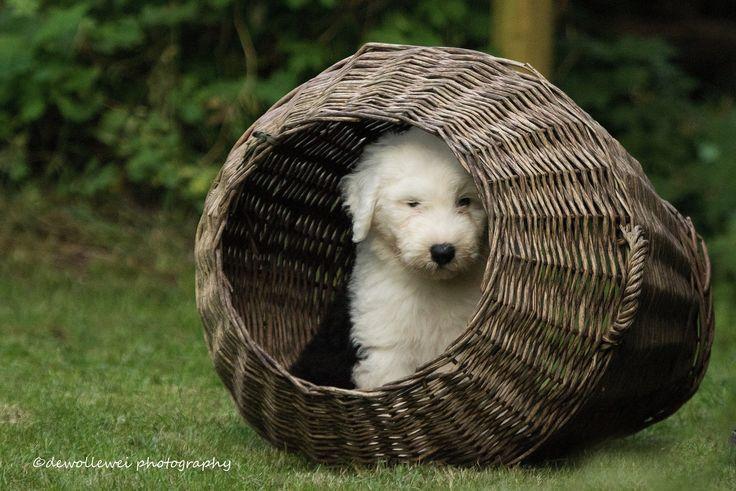 https://flic.kr/p/SHamZJ | puppy hide out...