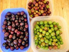 Préparer des olives maison , c'est possible…