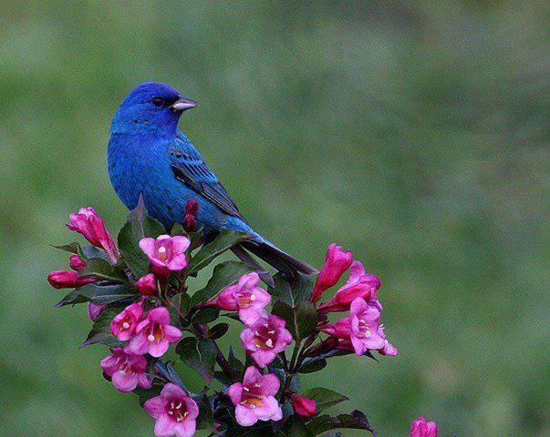 Flowers And Mountain Bluebird For Ma Belle