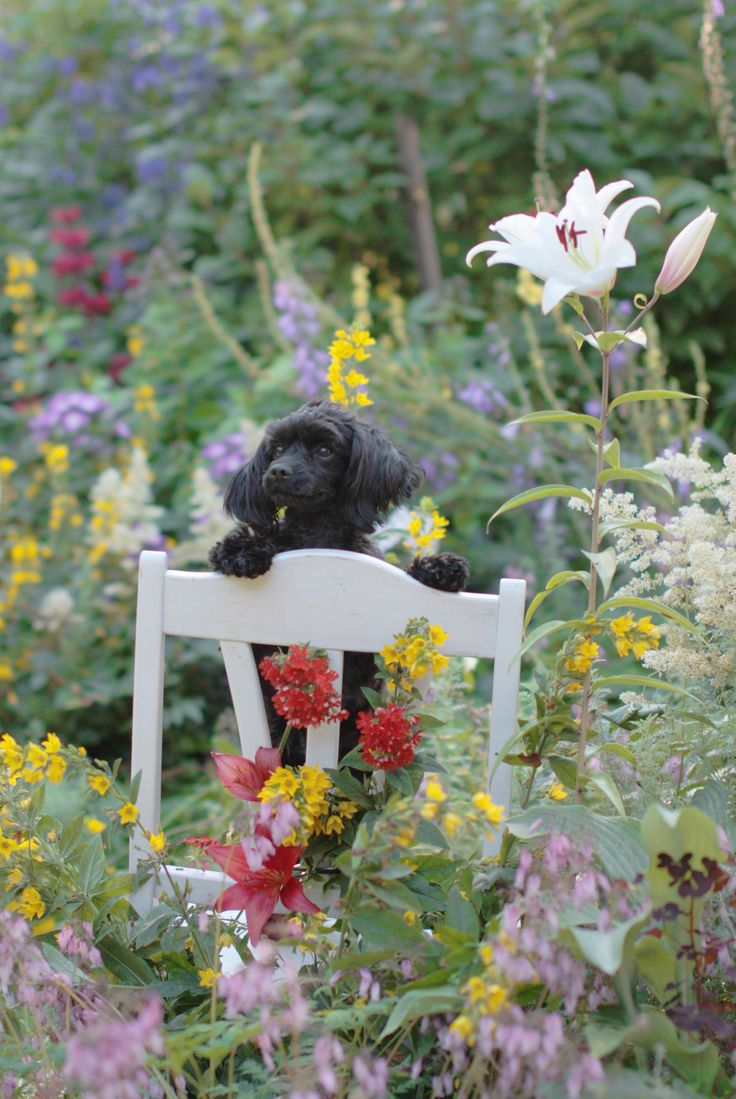 Photo by Satu Laaninen 2015. My friend's lovely dog.