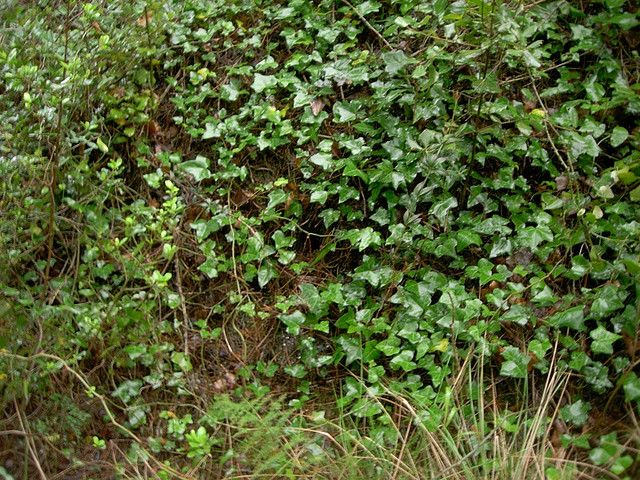 Steep hills in the landscape have always been a problem. Anyone who has mowed lawn on a hillside knows it's no picnic. So what's a gardener to do? Read this article and opt for hill ground cover instead.