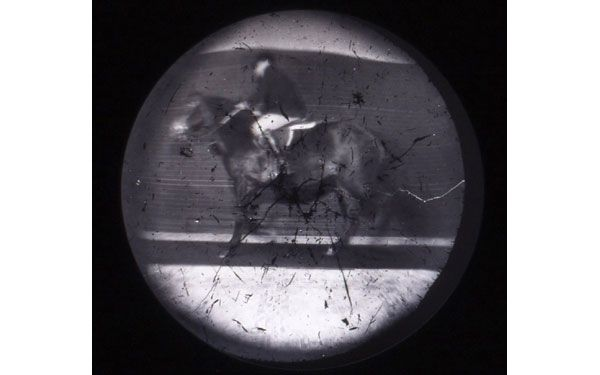 Steven Pippin: Lavandería-Locomoción, 1997. De la serie Caballo y jinete, detalle n° 6
