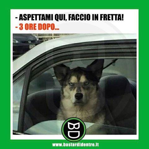 Le ultime parole famose! Tagga i tuoi amici e #condividi #bastardidentro #cane #ritardo www.bastardidentro.it