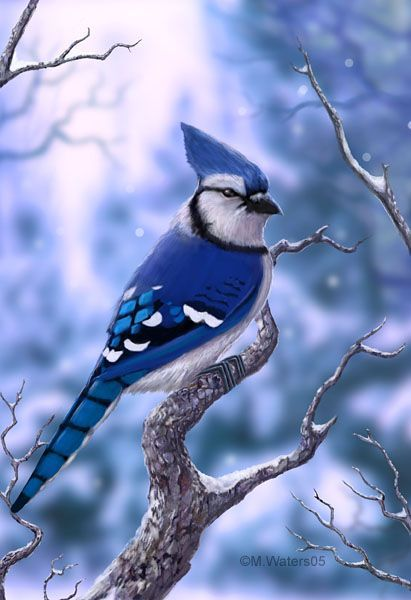 Blue Jay -- I love to put bird seed on my window sill in my home office, and then watch the Blue Jays and Cardinals flock to eat.: