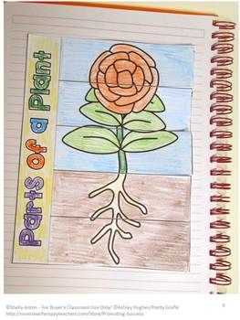 """FREE!!! Plant Parts: Your students will love this hands-on plants interactive notebook activity. The students will color and cut out a """"lift the flaps"""" books and attach it to their interactive notebooks. Two sets of plant part descriptions are provided. One set is for novice learners, and the other set is more descriptive. Students can cut and paste the descriptions under the correct plant part, or they can write their own description."""