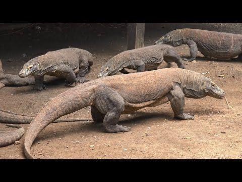 Les 25 meilleures id es de la cat gorie parc national de for Salle de bain komodo