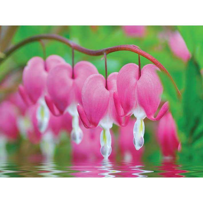 Πίνακας Bleeding Hearts Flowers