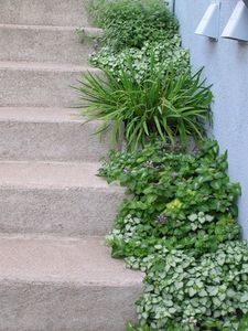 DIY: How to Landscape Outdoor Steps & Stairs thumbnail