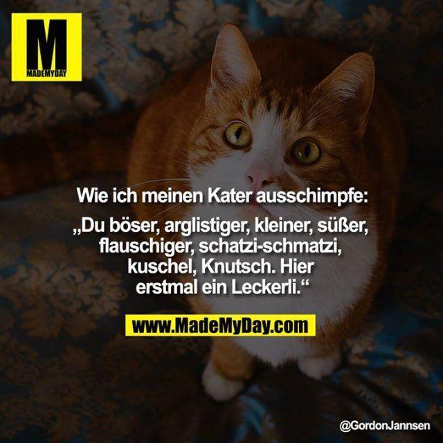 Pin Von Art Deko Stil Auf Art Deko Stil Katze Lustig Katzen Witze Katzen Lustige Spruche