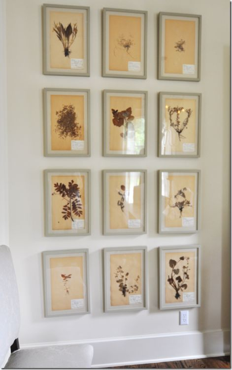 wall of botanicals